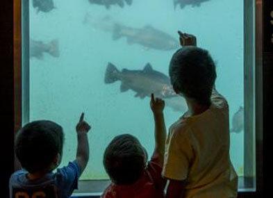 Underwater Observatory Queenstown